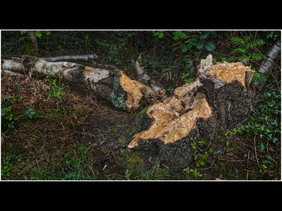 Decay broken log